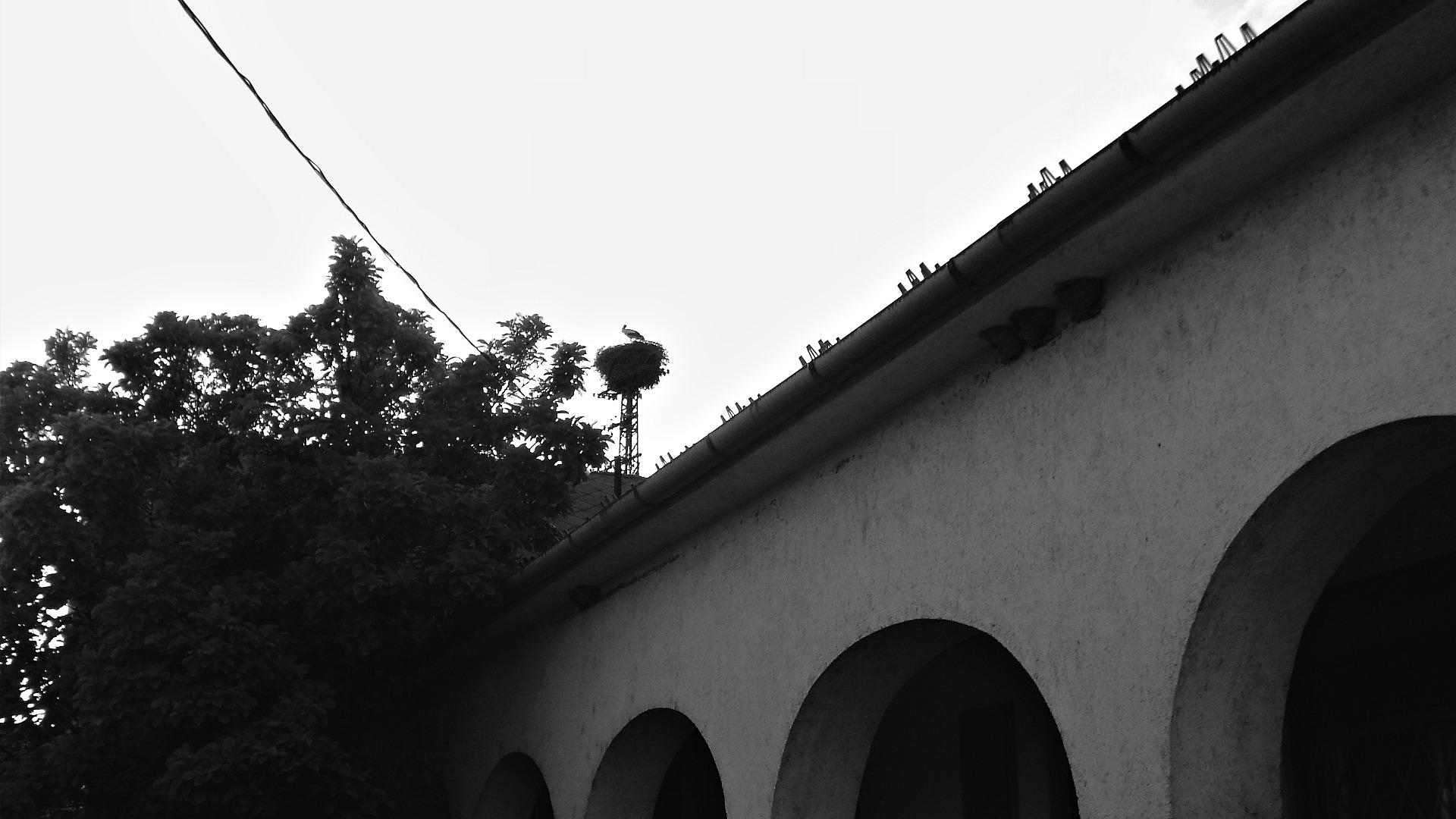Fehér gólya a kismarosi római katolikus templom melletti fészken - Fotó: Kovács Gabriella