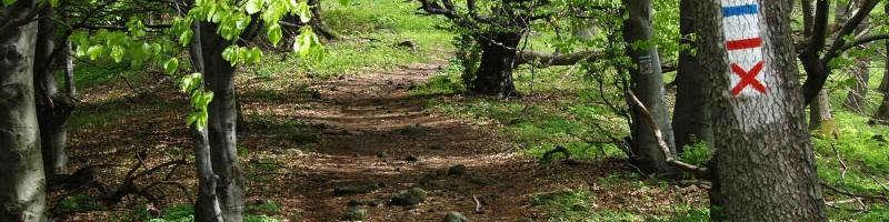 Járhatatlan túraútvonalak a Börzsönyben
