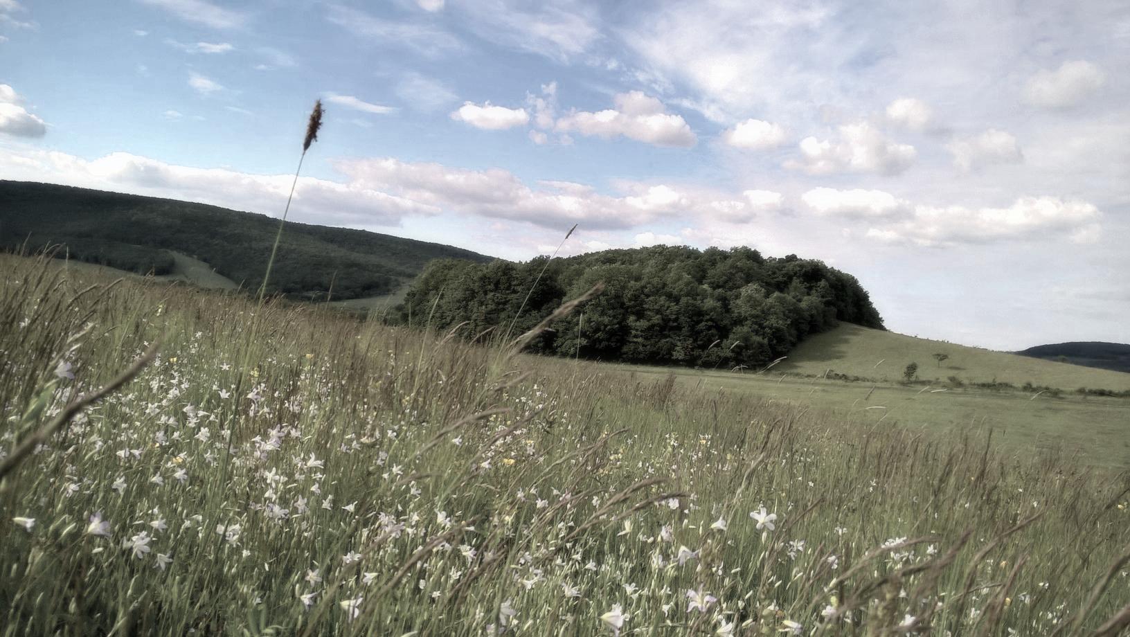 fav hill